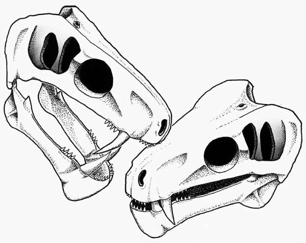 Fossil offers fresh insights into social habits of our non-mammalian ancestors
